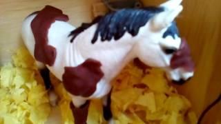 Speciál za 1000 odběratelů - Co si asi koně myslí? 2