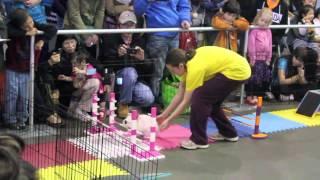 Bunny Rabbit Agility (vancouver Pet Expo 2013)