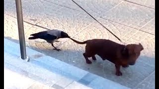 Animals Being Jerks COMPILATION [2018 EDITION]