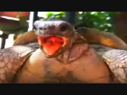 Turtles Having Orgasm To Turtles Happy Together