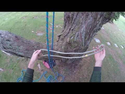 Basic Tree Climbing 01