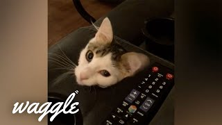 Masters of Camouflage | Funny Pet Compilation