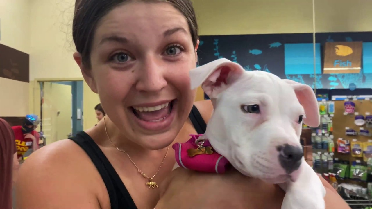 PITBULL PUPPY STEALS TOY FROM PETCO