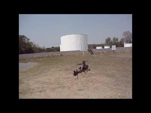 เฮลิคอปเตอร์บังคับ King cobra - RC helicopter king cobra