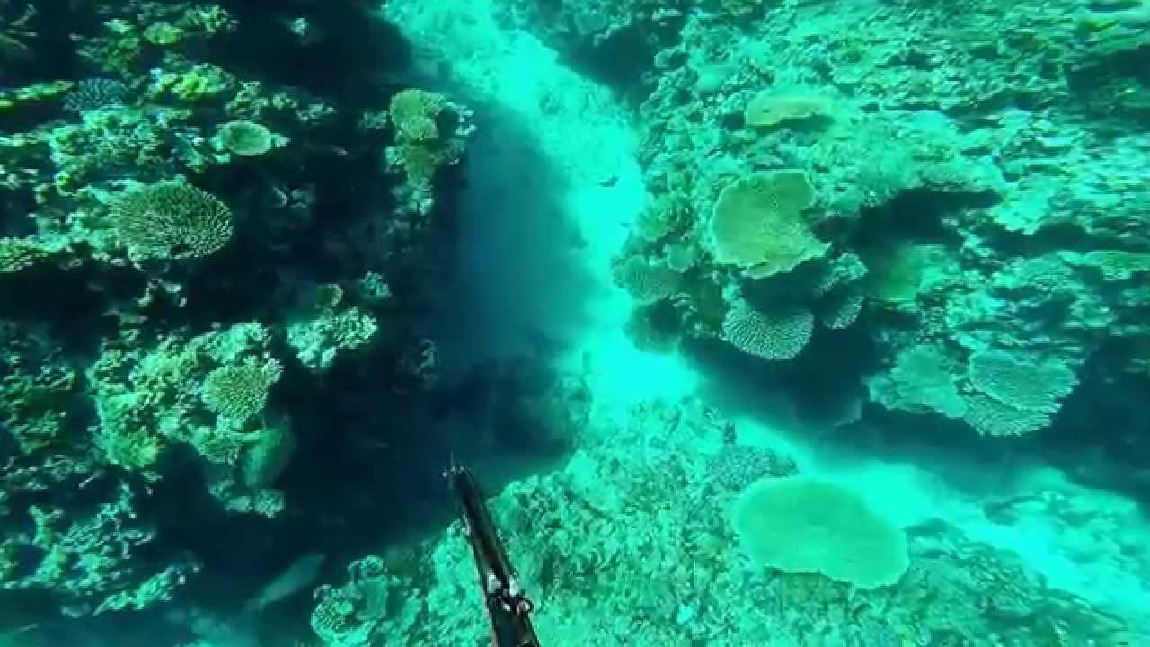 spear fishing charity reef