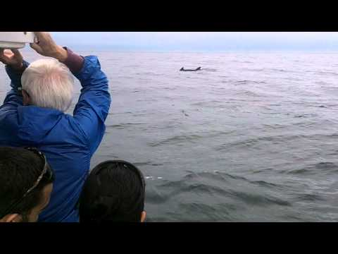 Happy Passengers and Long-finned Pilot Whales