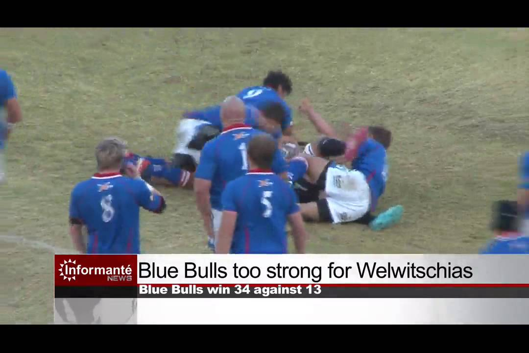 blue bulls too strong for welwitschias - youtube