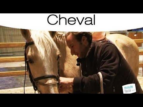 Comment choisir son cheval en fonction de la discipline youtube - Comment choisir son wok ...