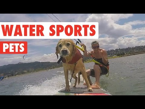 Water Sports Pets Video Compilation 2016