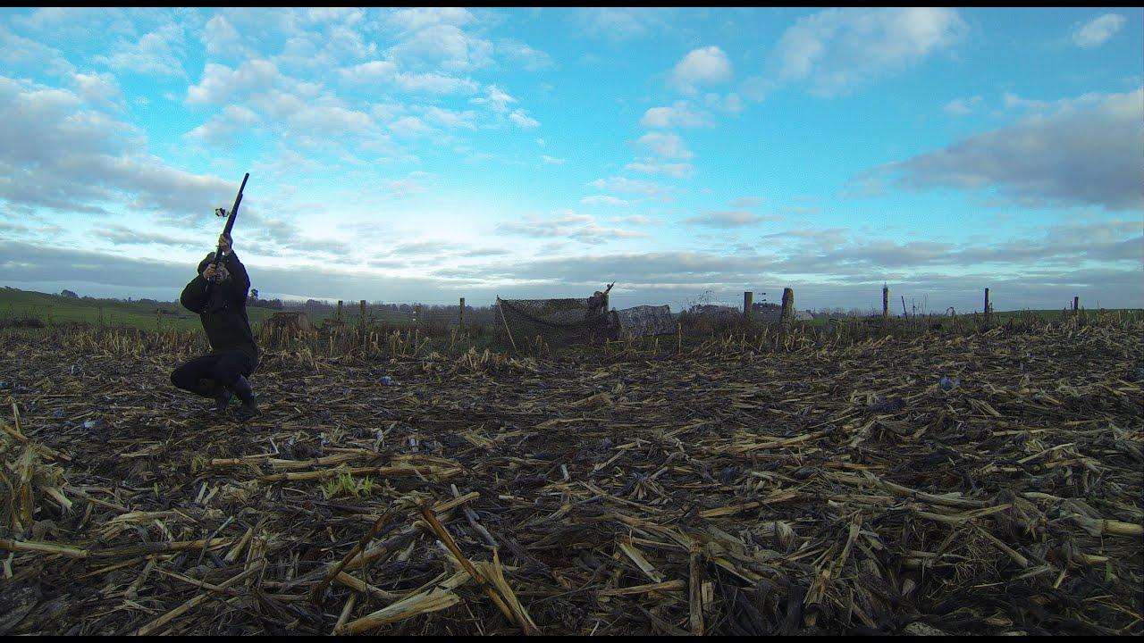 Nz Shooting Hd: Pigeon Shooting 145 Bird Day New Zealand GoPro Hero 3