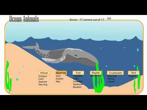 What Kind Of Animal? - Ocean Game - Fish, Mammal, Crustacean, Mollusk & More