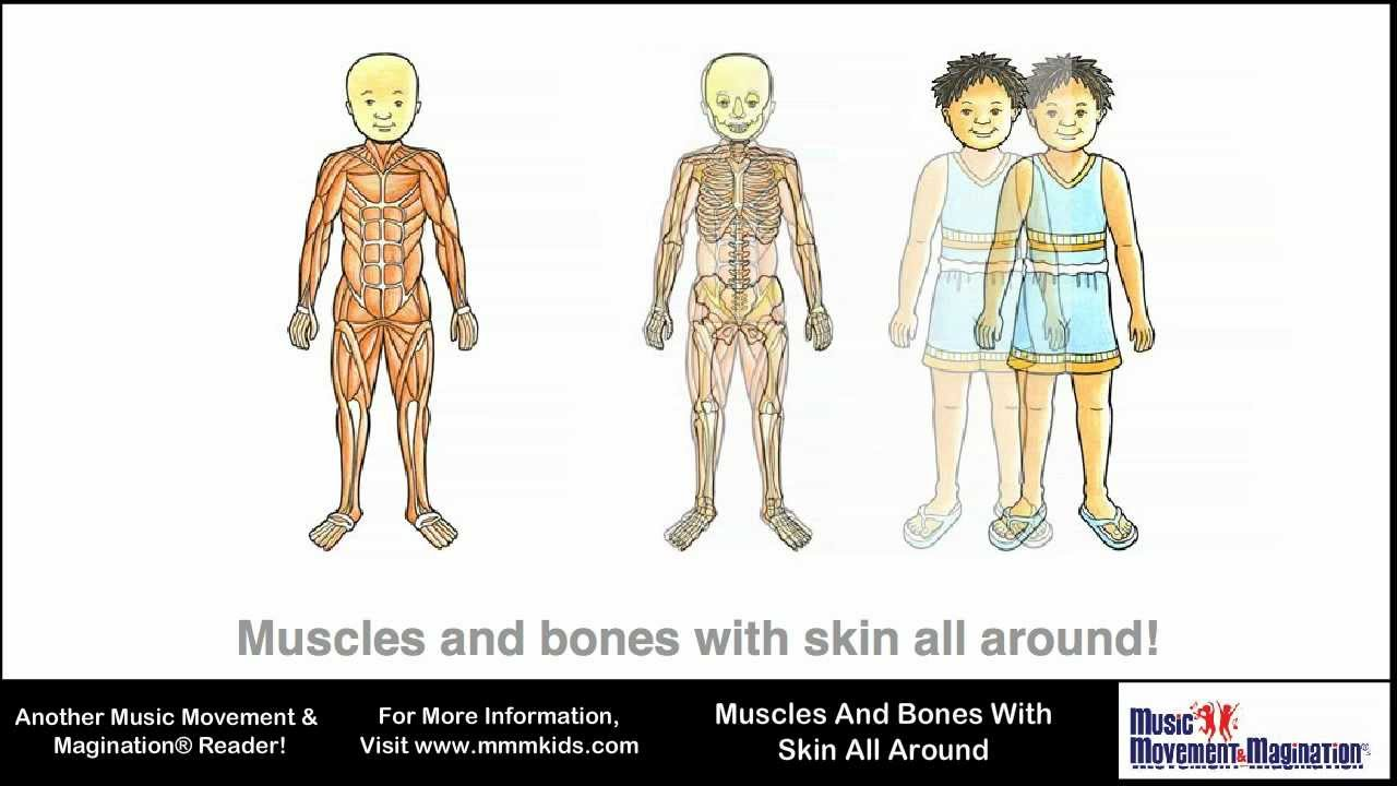 muscles and bones with skin all around - youtube, Skeleton