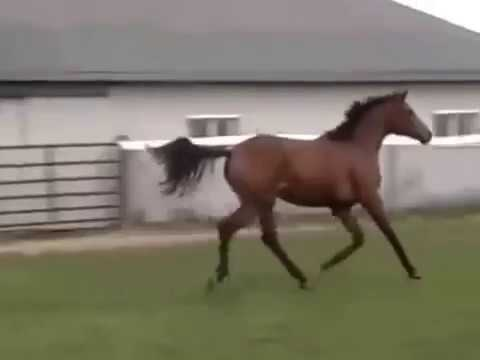 Delilah yearling clips