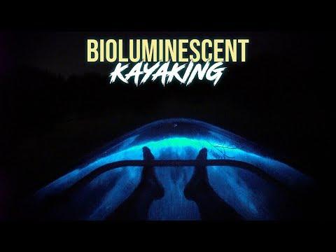 Clear Kayak Bioluminescent Tours - Florida's Best Bio Tours