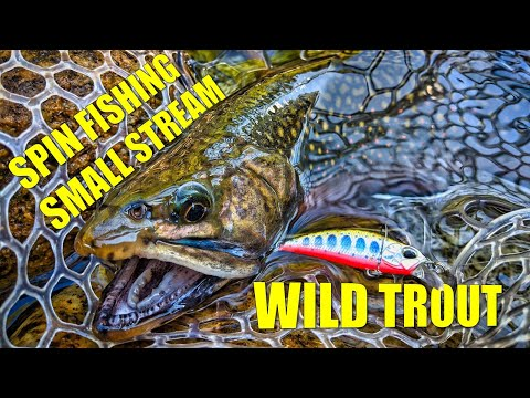 Small Stream Spin Fishing For Wild Trout [Personal Best Stream Brook Trout]