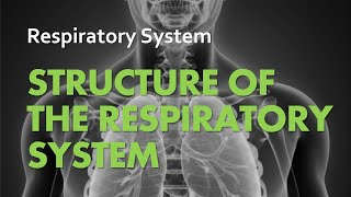 Anatomy & Physiology |  Respiratory System 01 - Structure of the Respiratory System