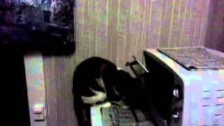 068 кошка-мишка