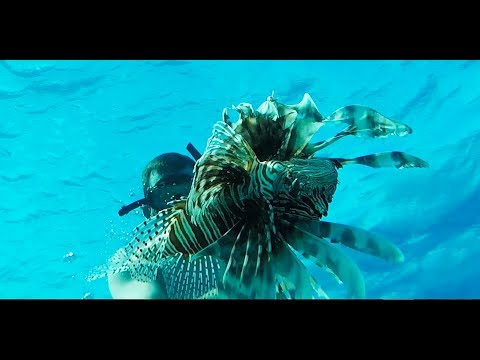 Lionfish {Catch Clean Cook} Staniel Cay, The Bahamas
