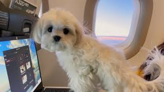 WE TOOK A PUPPY IN THE AIRPLANE, WHAT HAPPENED?