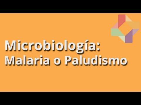 Малярия – причины, симптомы и виды малярии