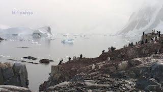 Petermann Island, Antarctica - Ashore with the wildlife  - February 2016