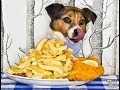funny cat and Dog love gif  ||  funny Video and cute