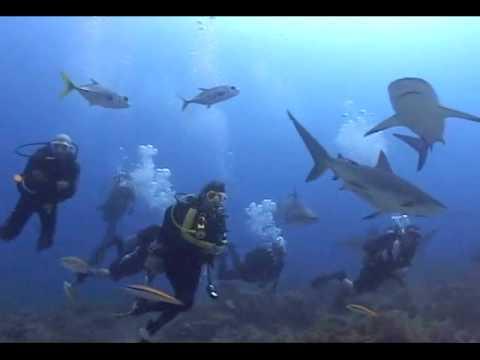 Shark dive in roatan youtube - Roatan dive sites ...
