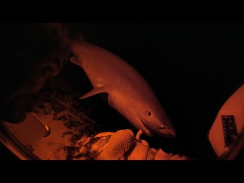 Would You Watch This Massive Shark Feed, Inches From Your Face? | River Monsters