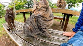 公園のベンチに座ったら猫が次々と集まってきた