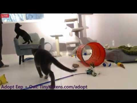 Tiny Kittens Shellys Afternoon Visit With Eep Owl