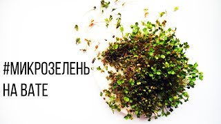 Микрозелень на Вате