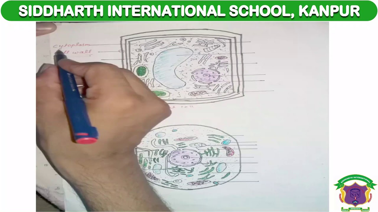 CBSE Class 9 Bio Cell Structure Part -3 - YouTube