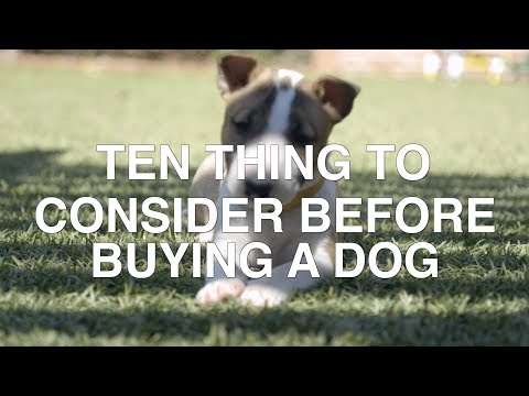 10 THINGS TO CONSIDER BEFORE BUYING A DOG