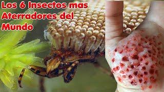 TOP 6 - Los insectos mas aterradores del mundo