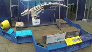 Orca Articulation Time-Lapse Video | California Academy of Sciences
