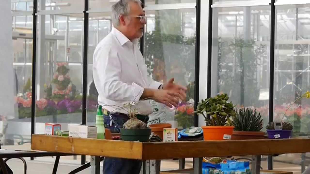 Terriccio Per Piante : Il terriccio per le piante grasse youtube