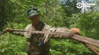 Несладкая жизнь башкирских бортевиков | Неизвестная Россия