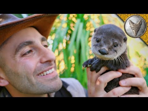 Cutest Baby Otter EVER!!