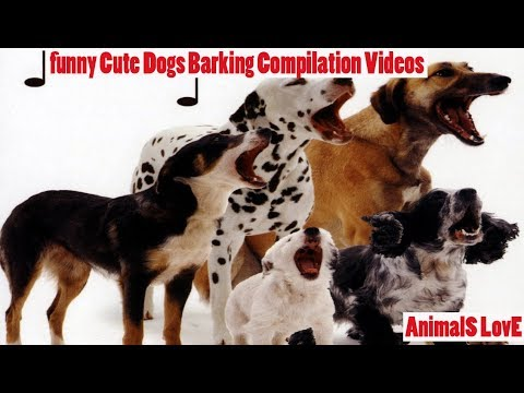 funny Cute Dogs Barking Compilation Videos !! AnimalS LovE