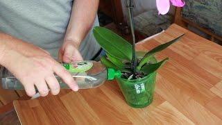 Как правильно поливать фаленопсис.  Домашняя орхидея - бабочка.  Горшок Орхидея(Как правильно поливать фаленопсис, домашнюю орхидею - бабочку с помощью горшка Орхидея. Ссылка на видео..., 2016-07-18T14:42:29.000Z)