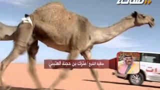 جديد 2013 | مدمرات | منقية الشيخ / مترك بن حجنة العتيبي