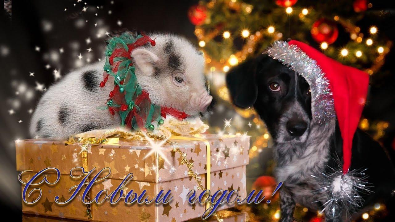 правой кнопкой поздравления от собаки с годом свиньи утверждает, что актер