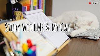 2018/05/26 실시간_같이 공부해요 study with me_dreams come true