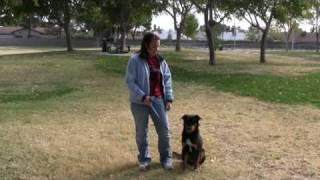 Testimonial For Southern Nevada K9 Training In Las Vegas