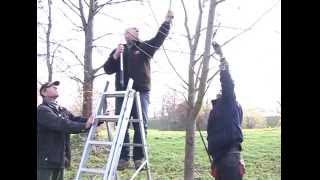 Repeat youtube video Baumschnitt Lehrgang - RAN1