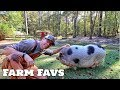 Our MOST Favorite Cog Hill Farm Video (Roots & Refuge Challenge)