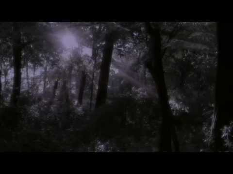 Fireflies ~ Lightning Bugs ~ Magical Firefly Display  in Pennsylvania Park ~ High Definition