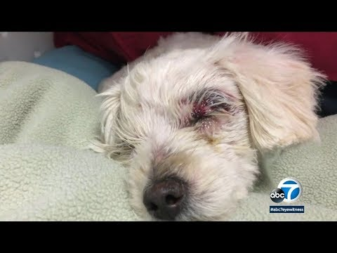 Bootleg Kev & DJ Hed - Severely Injured Dog Left in Trash in Long Beach