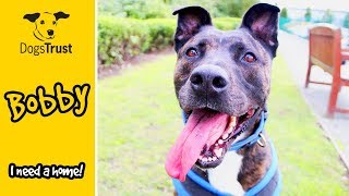 Bobby is a Big, Playful Boy Who Loves People! | Dogs Trust Manchester
