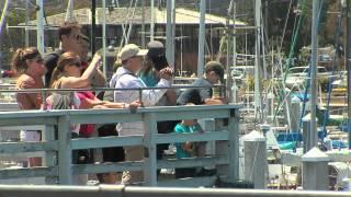 Monterey Fisherman
